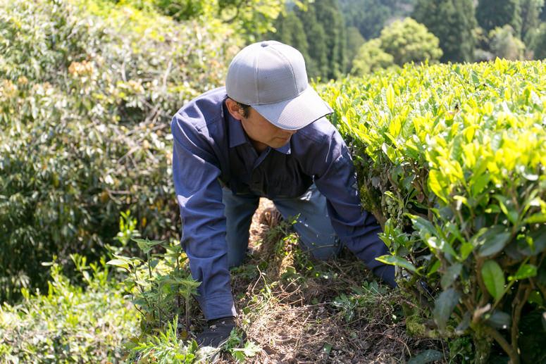 うきはの山茶 イメージ1