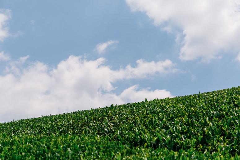 うきはの山茶 イメージ2