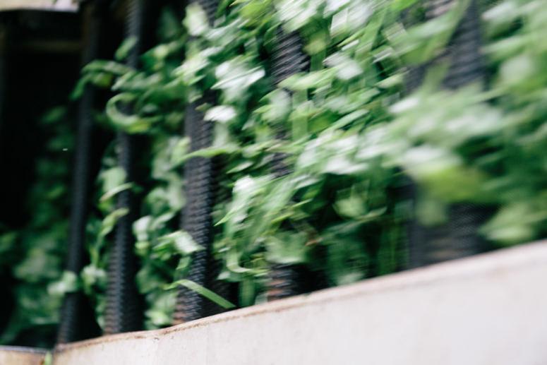 うきはの山茶 イメージ3